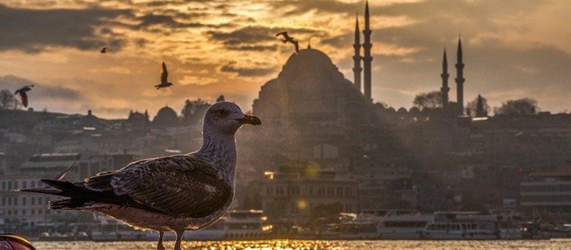 השתלת שיער בטורקיה - בעד ונגד
